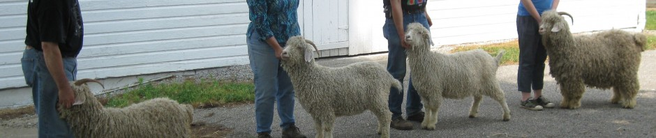 EAGMA 2012 Spring Show Results Wooster, Ohio | Eastern Angora Goat